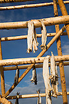 Cod fish drying outside on wooden pole, Svolvaer, Lofoten Islands, Nordland, Norway