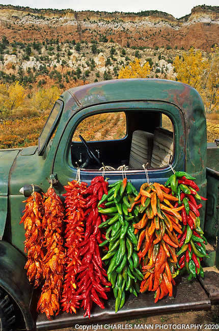 An old pickup truck suddenly becomes a work of art when the door is draped with a number of colorful strings of chile peppers, called ristras in New Mexico.
