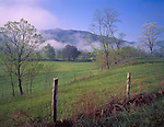 Great Smoky Mts. National Park, TN/NC<br /> Spring trees and weathered fence with lifting morning fog - Cades Cove