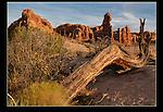 Juniper Tree frame in Arches National PArk, Utah.