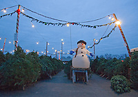An inflated snowman sits on a a box of pallets at the end of a line of Christmas trees for sale at a Columbus, Ohio, nursery lot.<br />