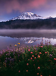 First light illuminates Mt. Rainier as the mist rises from the placid surface of Reflection Lake. By late July, alpine flowers flourish in the open meadows surrounding this, the Northwest's tallest volcano.