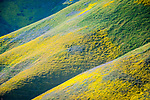 Crocker Canyon, colorful wildflowers cover the Temblor Range, Carrizo Plain National Monument, San Luis Obispo County, Calif.