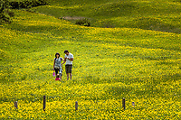 Italy, South Tyrol (Trentino - Alto Adige), Dolomites, near Selva di Val Gardena: young family amidst blooming alpine pasture | Italien, Suedtirol (Trentino - Alto Adige), oberhalb von Wolkenstein in Groeden: junge Familie in bluehender Almwiese