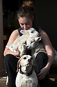 "21/04/15<br /> <br /> Melissa Ebbatson with the lambs and Draughtsman.<br /> <br /> Two 'sheep dogs' are helping to pamper three orphaned lambs who think the dogs are their mum.<br /> <br /> The three orphaned  lambs, who wear nappies so they can have the run-of-the-house, like to snuggle up to the dogs and share their bed with them in the kitchen by the stove.<br /> <br /> Piper, an 11-year-old rhodesian ridgeback-cross and Draughtsman, an eight-year-old ex-hunting beagle, take turns looking after the week-old lambs who often try to suckle from their doting canine 'parents'.<br /> <br /> Melissa Ebbatson, 21, said: ""These three were quite poorly, so we brought them inside so we could look after them better and give them a bit more warmth. We put them in nappies so they don't make a mess in the house.  One of the dogs was having a snooze on his bed and the lambs just jumped in and joined him. And they've all become inseparable since then.<br /> <br /> ""The dogs like to clean the lambs' faces after they've had their bottles. And they enjoying romping around the place with them,"" said Melissa who helps to run Crossgates Farm, with her family near Tideswell in the Derbyshire Peak District.<br /> <br /> ""They seem to really care about them and go straight to them if they start bleating – they even come to find us if they think they're hungry.<br /> <br /> ""We change their nappies at least four-times-a-day - the baby boys even need to wear two!<br /> <br /> ""They are between seven and eight days old, and we hope to get them living back outside again when they are strong enough in another ten days or so – that's as long as the dogs let us!<br /> <br /> ""We're probably all a bit bonkers here but it all seems normal to us"", she added.<br /> <br /> All Rights Reserved: F Stop Press Ltd. +44(0)1335 418629   www.fstoppress.com."