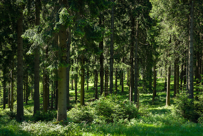 Deutschland, Thueringen, Thueringer Wald | Germany, Thuringia, Thuringian Forest