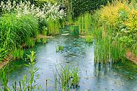 France, Loir-et-Cher (41), Chaumont-sur-Loire, domaine de Chaumont-sur-Loire et festival international des jardins 2019, thème, Jardins de Paradis,  bassin d'eau bleue sous la pluie