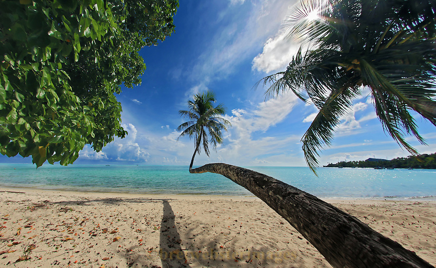 A graceful palm reaches impossibly for the sun and the beauty of Bora Bora.