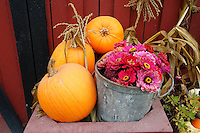 October harvest display of pumpkins and flowers at a farm in Ladner, British Columbia, Canada
