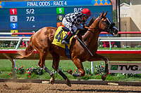 DEL MAR, CA  AUGUST 4:  #4 Tap the Wire, ridden by Drayden Van Dyke, in the stretch of the Graduation Stakes on August 4, 2018 at Del Mar Thoroughbred Club in Del Mar, CA. (Photo by Casey Phillips/Eclipse Sportswire/ Getty Images)