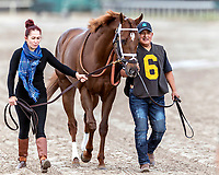 HALLANDALE BEACH, FL - FEB 3:Strike Power #6 trained by Mark A. Hennig is led to the paddock prior to winning the $200,000 Swale Stakes (G3) at Gulfstream Park on February 3, 2018 in Hallandale Beach, Florida. (Photo by Bob Aaron/Eclipse Sportswire/Getty Images)