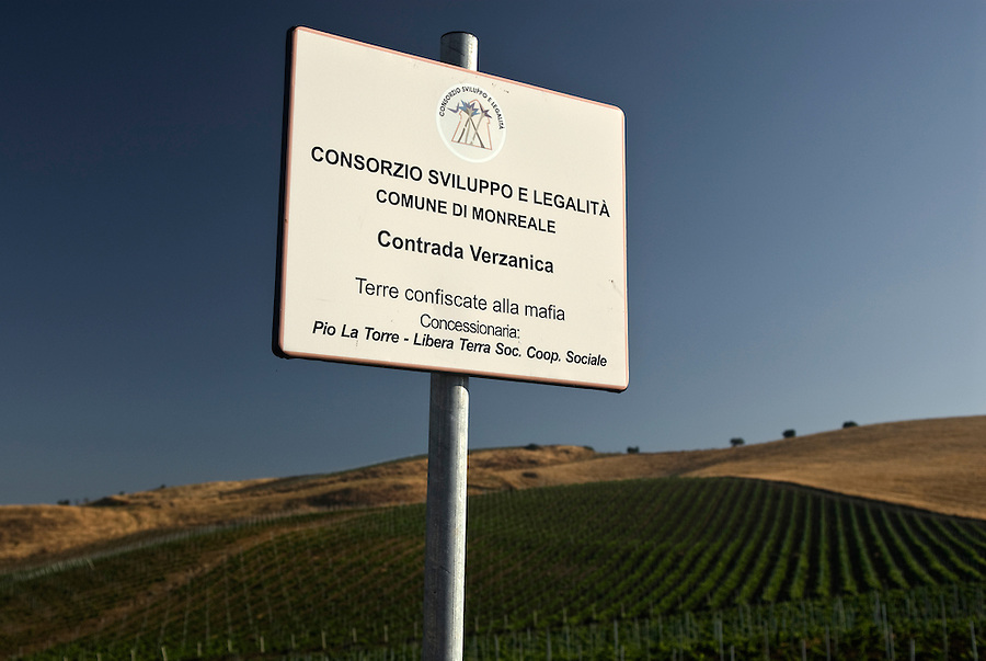 One of the mafia confiscated vineyards assigned to the social cooperative Pio La Torre at Contrada Verzanica. /  Una delle vigne assegnate alla cooperativa Pio La torre in località contrada Verzanica.