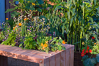 squash zucchini courgette, cabbage, edible flowers tropaeoleum nasturtiums, corn, flowers and vegetable garden mixed together, raised beds, container, chard, viola, calendula, parsley, herbs, sage Salvia, onion aka Cavalo Nero kale