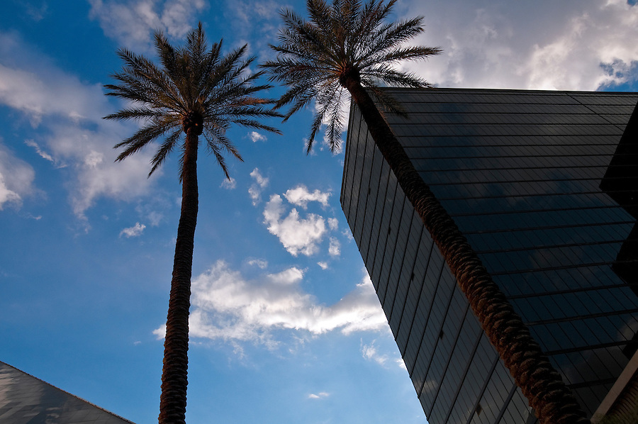 Horizontal view of a high rise building and palms.