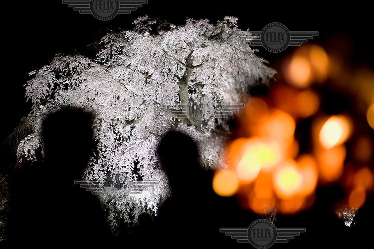 People, attending a fire ceremony in Maruyama Park, are silhouetted against a white cherry blossom tree. /Felix Features