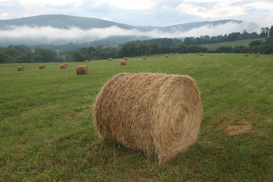 Hay bails on a farm in front of the Blue Ridge mountains  in Greene County, VA.