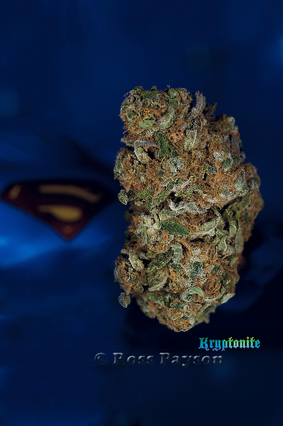 Papaya nug photo, shot in a professional photography studio.