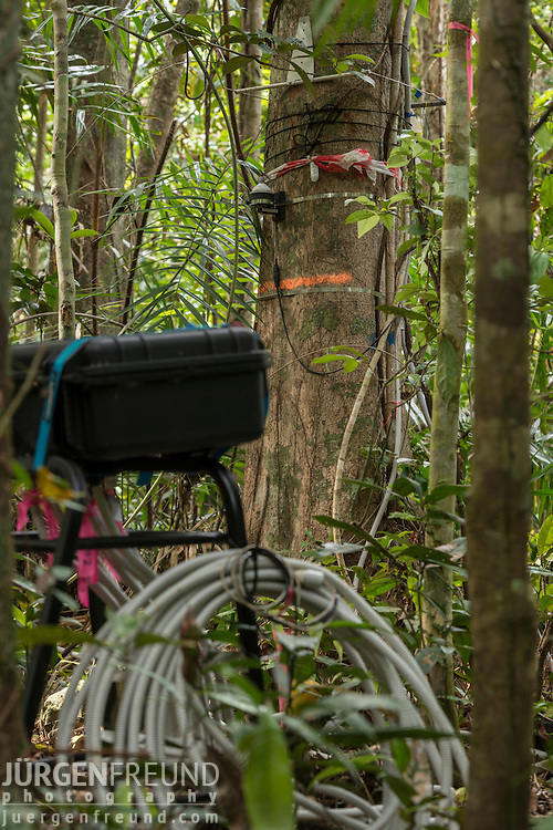 A very plugged forest at the Daintree Rainforest Observatory. Scientific instruments attached to trees to measure many different elements: carbon dioxide exhaled; tree's water intake and flow; growth rate.