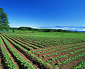 File photo of Fukushima Prefectural agricultural area before the 2011 Tohoku-Kanto Natural Disaster. Fukushima Prefecture and all surrounding prefectures have been hit particularly hard by the 2011 Tohoku Earthquake and Tsunami and its aftermath of radiation exposure from the Fukushima Daiichi nuclear power plant. The Japanese government has halted the sale and distribution of spinach and other vegetables, as well as milk and dairy products, originating from the disaster zone. (Photo by AFLO)