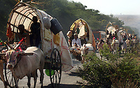 "Yellamma worshippers travel by bullock cart to the Yellamma Temple in Saundatti, India, on the first day of the Yellamma Jatre (festival).  The Yellamma Jatre is an annual gathering of half a million Yellamma pilgrims who converge on the temple to worship the deity, Yellamma.  Amongst the rituals traditionally performed to appease Yellamma, young girls are dedicated as Devadasi or ""temple servants"".  These young girls are married to the deity and must spend their lives serving the deity which includes catering to the sexual needs of men in the community.  They may not marry a mortal and often end up working in brothels in India's urban centers. While the dedication ceremonies used to be performed in public at the Jatre and included parading the young girls naked through the crowds or covered in ""neem"" leaves, due to the Devadasi Prohibition Act, they are now performed in secret."