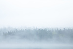 A foggy day at Frazer Point in Acadia National Park, Downeast, ME, USA
