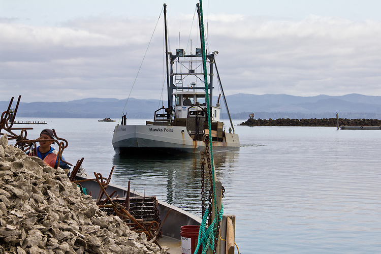 Washington Coast, Ocean Park, Nahcotta, oyster scow, commercial oyster farming, Willapa Bay, Pacific County, Southwest Washington, Washington State, Pacific Northwest, USA,