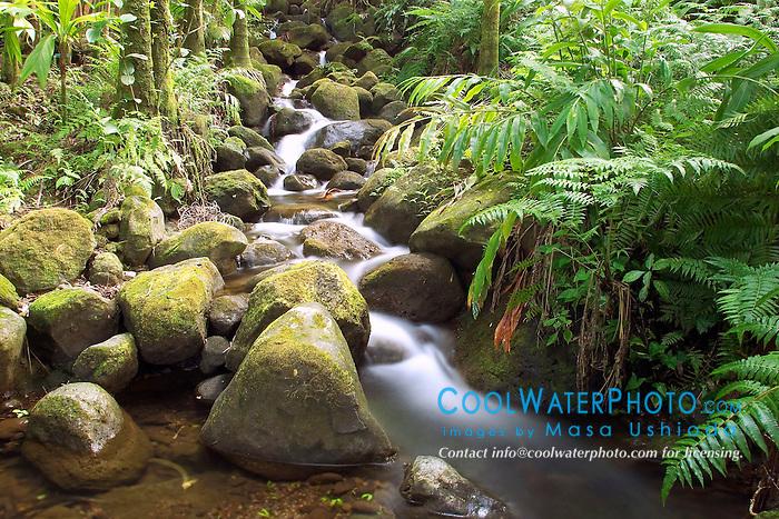 Onomea Streams, Hilo, Big Island, Hawaii