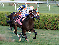 Opry (no. 8) wins the With Anticipation  Stakes (Grade 3), Aug. 29, 2018 at the Saratoga Race Course, Saratoga Springs, NY.  Ridden by  Javier Castellano, and trained by Todd Pletcher, Opry finished 1 1/2 lengths in front of Somelikeithotbrown (No. 7).  (Bruce Dudek/Eclipse Sportswire)
