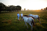 Dec. 14, 2011 - Yopal, Colombia. llaneros (cowboys) bring in their horses ahead of a days work. © Nicolas Axelrod / Ruom