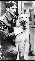 BNPS.co.uk (01202 558833)<br /> Pic:   ImperialWarMuseum/BNPS<br /> <br /> Rifleman Khan with his handler, Corporal Muldoon, whom he rescued from drowning during the attack on Walcheren in 1944.<br /> <br /> The remarkable stories of the 71 heroic animals who have received the pet equivalent of the Victoria Cross are told in a new book.<br /> <br /> They include a dog who dragged his drowning handler to safety in a torrent of shells and machine gun fire and a carrier pigeon which flew 120 miles to raise the alarm for a bomber crew who had crashed into the sea.<br /> <br /> Their courageous acts, and others involving dogs, cats, pigeons and horses, feature in history teacher Philip Hawthorne's book, The Animal Victoria Cross: The Dickin Medal.