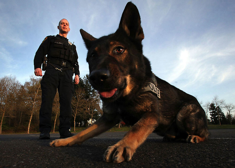 Tigard Police K-9 officer Baxter waits for Officer Brian Jackson's next command on Thursday, March 11, 2010. Baxter who is a 3-year-old German Shepherd will be approaching the second anniversary as the Tigard Police Department's K-9 officer.<br /> Photo by Jaime Valdez