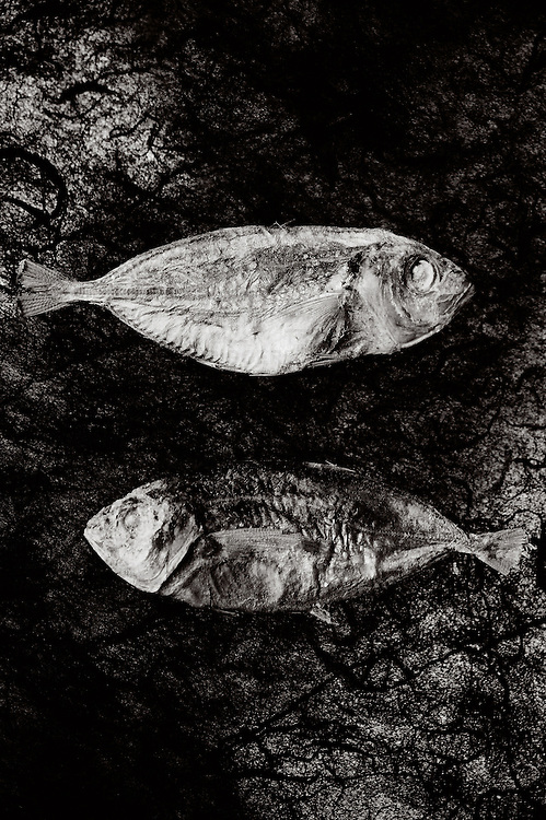 Two dry fishlying on a piece of elephant paper.one is looking to the right,the other one to the left.