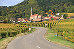 France, Alsace.  <br /> An S-shaped curve leading from the center of a photo is a sure winner. The Route du Vin through vineyards from Eguisheim to Turckheim, Alsace, France