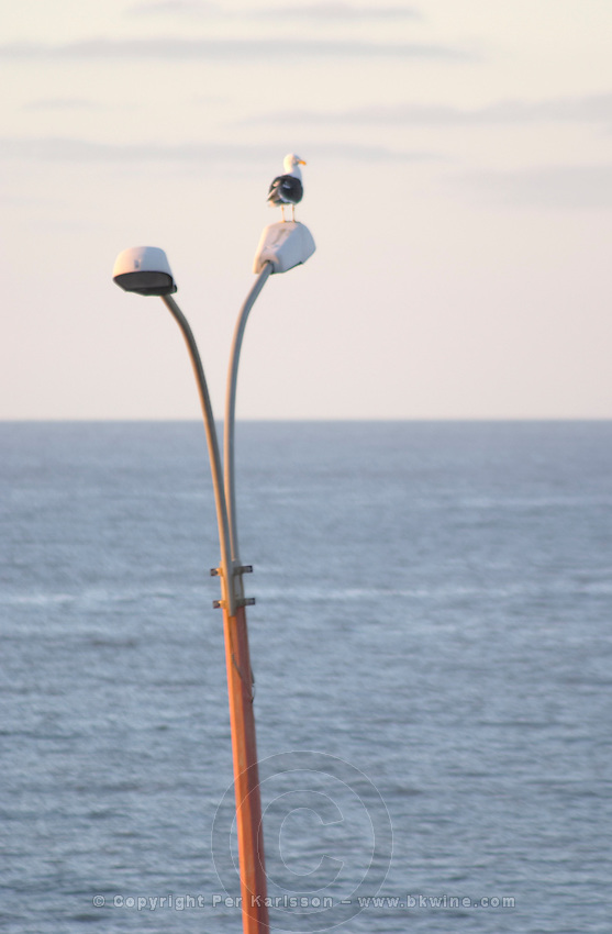 Coast line at dawn along a street. A lamp post with a lone single sea gull against the horizon. Montevideo, Uruguay, South America
