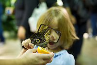 "A child from the Goddard Riverside Head Start Program observe an owl butterfly (caligo eurilochus) in ""The Butterfly Conservatory:  Tropical Butterflies Alive in Winter"" at the American Museum of Natural History in New York on Thursday, October 6, 2011.  500 butterflies hover above the visitors in the 1200 square foot  vivarium where children and adults can observe and play amongst the flying beauties.  (© Frances M. Roberts)"