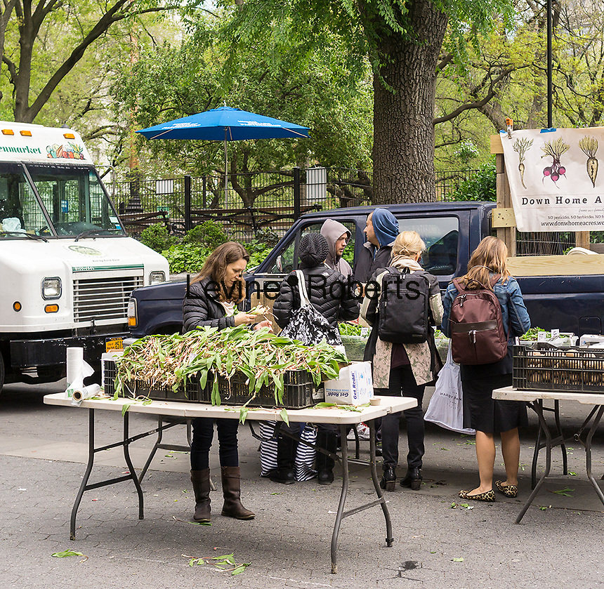 The sought after relative of the onion, ramps, are featured front and center at a stand in the Union Square Greenmarket in New York on Wednesday, April 27, 2016 The vegetable, which can be eaten raw, inspires a cultish following due to their scarcity and limited season. Ramps are not cultivated but are foraged, probably by little ramp elves. (© Richard B. Levine)