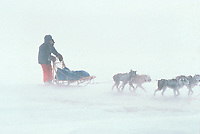 D.Monson in snowstorm near Safety chkpt 1983 Iditarod
