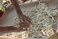 Castelbuono, lavorazione della  manna nell'azienda Gelardi..<br /> Castelbuono: producing manna in Giulio Gelardi farm
