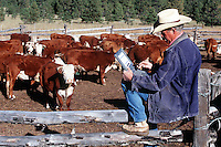 A rancher sits atop a fence with a laptop computer as a herd of cattle looks on.