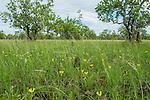 parque nacional do araguaia