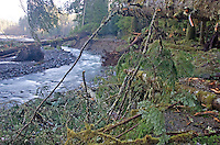 Carbon River Road washed out by November, 2006 flooding in Mount Rainier National Park, Washington State