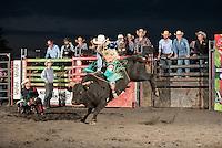 SEBRA - Lewisburg, WV - 8.22.2015 - Bulls & Action