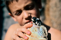 A young boy holds a juvenile Hawksbill Turtle, Eretmochelys imbricata, Eilat Underwater Observatory Marine Park, Eilat, Israel, Red Sea, MR