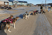 Sonny Lindner drives his team through snow-less Golovin on Monday, March 10, during the Iditarod Sled Dog Race 2014.<br /> <br /> PHOTO (c) BY JEFF SCHULTZ/IditarodPhotos.com -- REPRODUCTION PROHIBITED WITHOUT PERMISSION