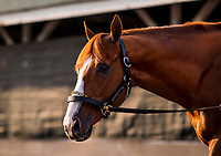LOUISVILLE, KY - MAY 06: The Kentucky Derby winner Justify the morning after winning at Churchill Downs on May 6, 2018 in Louisville, Kentucky. (Photo by Alex Evers/Eclipse Sportswire/Getty Images)