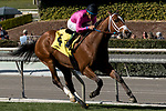 ARCADIA, CA  FEBRUARY 24: #4 Conquest Tsunami, a survivor of the San Luis Rey fire, ridden by Victor Espinoza, in the stretch of the  Daytona Stakes (Grade lll) on February 24, 2018, at Santa Anita Park in Arcadia, CA. (Photo by Casey Phillips/ Eclipse Sportswire/ Getty Images)