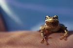 Green tree frog on young girls arm at park Lake Pleasant Bothell Washington State USA