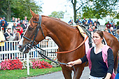 Flower Bowl winner Nahrain in the paddock prior to the race. What a looker!