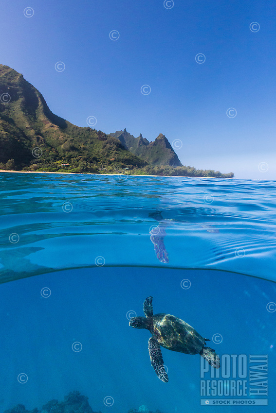 A honu (or green sea turtle) swims in the crystal clear waters off the coast of Kaua'i.