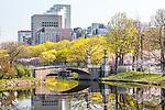 Springtime on the Charles River Esplanade, Boston, MA